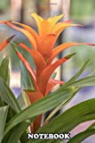 Notebook: Guzmania Lingulata In The Vase , Journal for Writing, College Ruled Size 6' x 9', 110 Pages