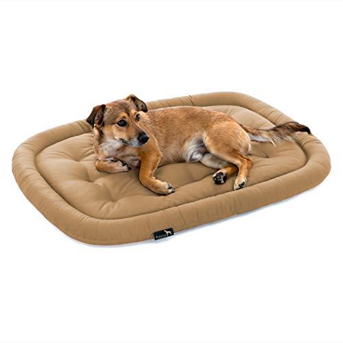 Pointer | Hundekissen waschbar, orthopädisches Hundebett für große Hunde (XL - 105x80 cm, Beige)