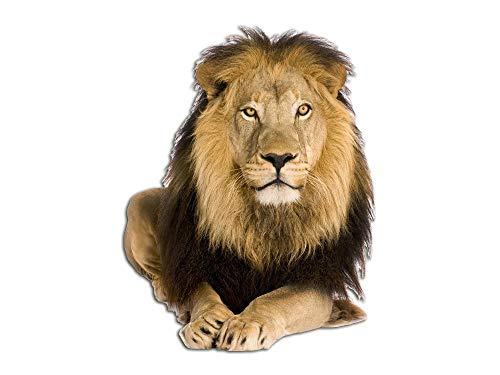 GRAZDesign Wandtattoo Löwe Löwenkopf, Wandaufkleber Savanne, Afrika Tattoo Tier 3D / 65x50cm