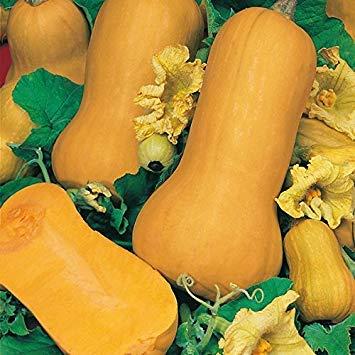 Shopvise Suffolk Herbes - Squash bio Waltham Butternut - 10 graines