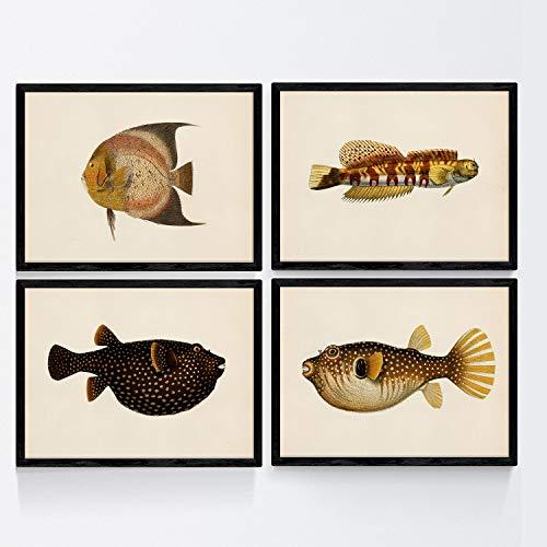 Nacnic Set de 4 láminas con pez Colorido Efecto Vintage Tono Amarillo Negro. Melata. Composicion de 4 Peces Diferentes en tamaño A3, Fondo Papel Antiguo Vintage Poster Papel 250 gr Marco