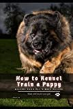 How tо Kennel Train а Puppy: become your pet's best friend