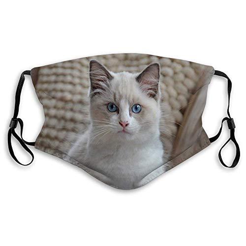 Máscara facial para hombres y mujeres, niños y niñas blanco Ragdoll gatito blanco Ragdoll gatito blanco ojos azules brillantes mirando cámara contra el fondo almohadas blancas bufanda cara