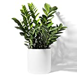 POTEY Large Plant Pot