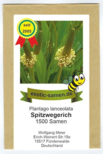 Spitzwegerich - Plantago lanceolata - Bienenweide - Arzneipflanze des Jahres 2014-1500 Samen