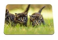 22cmx18cm マウスパッド (子猫草3歩く猫猫子猫) パターンカスタムの マウスパッド