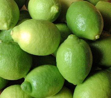 国産レモン 10kg 防腐剤 防かび剤不使用 ノーワックス 瀬戸内のレモンの島 岩城島 皮ごと食べられるレモン
