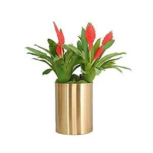 Skyseen 2Pcs Artificial Tropical Tillandsia Succulents Bromeliads Flower for Floral Arrangements