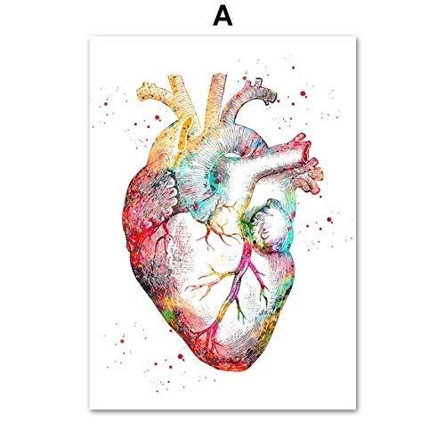 Arte de la anatomía Corazón Humano Cerebro Pulmones Arte de la Pared Pintura de la Lona Carteles e Impresiones nórdicos Cuadros de la Pared para el médico Decoración de la Oficina 40X60 CM