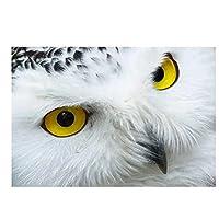 フルスクエアドリルクロスステッチクリスタルラインストーン刺繡、風景フクロウクロスステッチDIYダイヤモンド刺繡動物フルラインストーンモザイク家の装飾ギフト45x55cmフルスクエアダイヤモンド