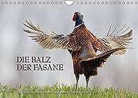 Emotionale Momente: Die Balz der Fasane / CH-Version (Wandkalender 2022 DIN A4 quer): Die Balz der Fasane ist exotisch und dramatisch zugleich. Ingo Gerlach GDT hat dies in wunderschoenen Bildern festgehalten. (Monatskalender, 14 Seiten )