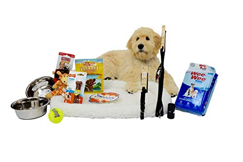 Complete Puppy Starter Kit Bundle! Dog Starter Pack with Brand Name 5 Star Items! Includes Kong, Lupine, Nylabone and More! Everything for a New Puppy! 6' Leash (1