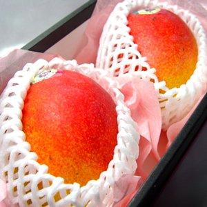 【お中元】 メキシコ産 アップルマンゴー 2個 (1個400g〜450g) 化粧箱入り【のし付】