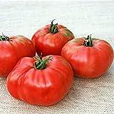 Sandul Moldovan Tomato Seeds (25+ Seeds)