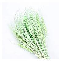 乾燥花フラワーズ 50pcs / lotはナチュラルドライフラワー小麦の耳ブーケのためにウェディングパーティーの装飾DIYクラフトホームデコレーションスクラップブック小麦支店の小道具 (Color : Green)