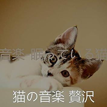 音楽-眠っている猫