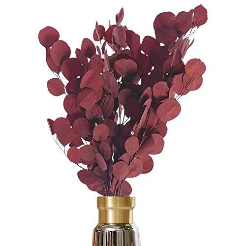 AideMeng Hochwertige Trockenblumen Eukalyptus