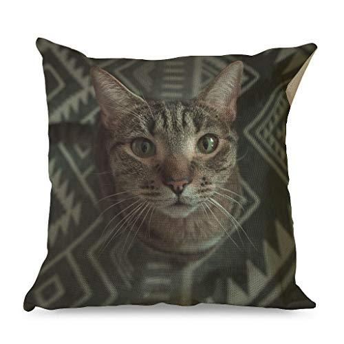 IOVEQG American Shorthair - Funda de almohada de algodón suave con cremallera oculta para sala de estar, estilo familiar, mascota, gato, blanco, 45 x 45 cm