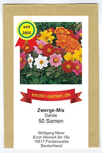 Dahlia - Dahlien - Niedlicher Zwergen-Mix - 50 Samen