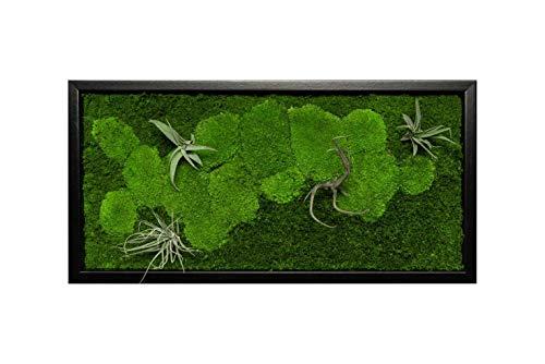 Pflanzenbild kaufen Moosbild mit lebenden Pflanzen Wandbild Moos Wanddeko Poster rechteckig in versch. Maßen