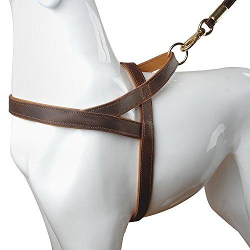 Berry Hundegeschirr, 2,5 cm breit, strapazierfähiges Echtleder, weich und langlebig, gepolstert, für Training, Sport, Wandern, Reisen für mittelgroße und große Hunde, braun