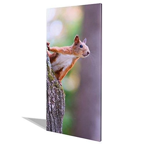 banjado Design Magnettafel groß | Magnetwand weiß 78x37cm weiß | Pinnwand magnetisch mit Magneten und Montageset | Magnetpinnwand mit Motiv Eichhörnchen