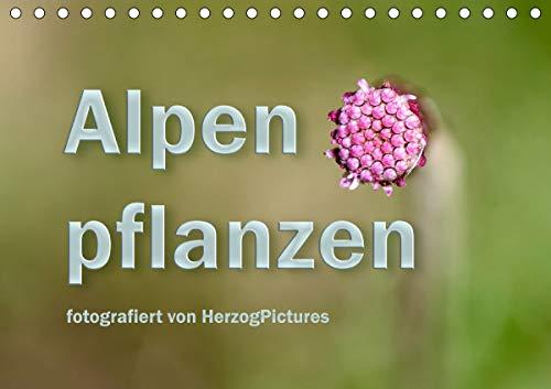 Alpenpflanzen fotografiert von HerzogPictures (Tischkalender 2021 DIN A5 quer)