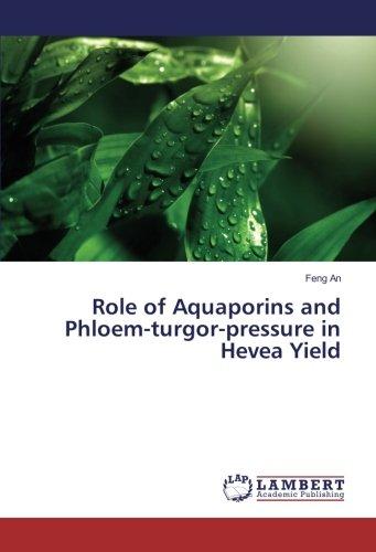 Role of Aquaporins and Phloem-turgor-pressure in Hevea Yield