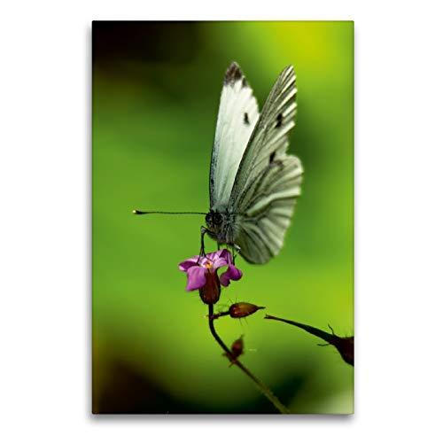 Premium Textil-Leinwand 60 x 90 cm Hoch-Format Flattermann | Wandbild, HD-Bild auf Keilrahmen, Fertigbild auf hochwertigem Vlies, Leinwanddruck von Erwin Renken