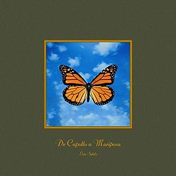 De Capullo a Mariposa