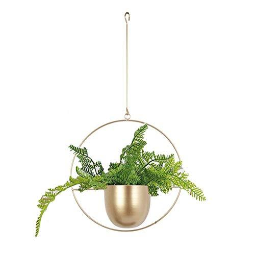 Cratone Hängender Pflanzenaufhänger Metall Gold Blumenampel Decke hängender Übertopf für Zimmerpflanzen, Sukkulenten, Luftpflanzen, Kakteen