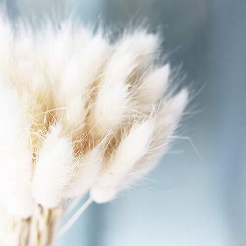 Begorey Garten- Bunny Tails Samen Hasenschwanz-Gras Selten Ziergras Samtgras Grassamen Saatgut winterhart