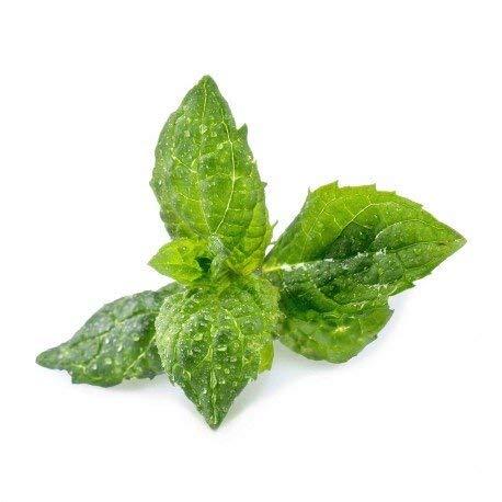 Lingot® Menthe verte BIO - Compatible Véritable® Potager - Recharge prête à l'emploi