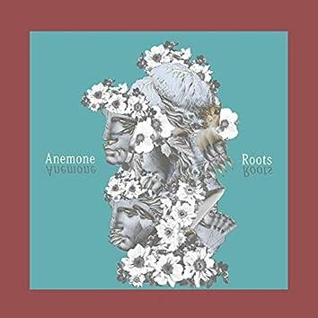 Anemone root