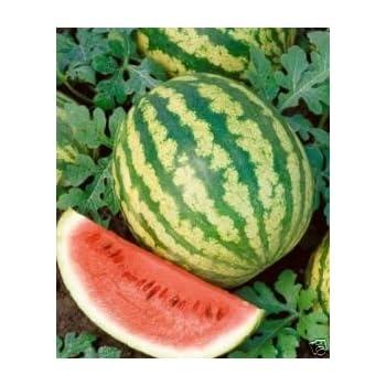 Watermelon Crimson Sweet Great Heirloom Garden Vegetable Bulk 1,000 Seeds