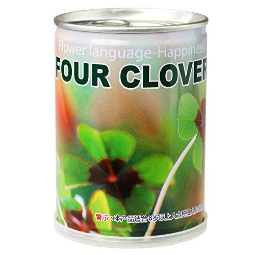 Monsterzeug Glücksklee in der Dose, Glücksbringer Kleeblatt, Glücksklee Samen, 4 blättriges Kleeblatt zum Verschenken, Zimmerpflanze