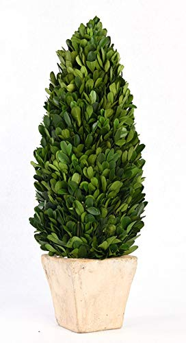 BoxWoodLand Real Boxwood Plant Wreath, Ball, Cone Tree, Wedding Home Decoration, Realistic Full Green Plant, Indoor Décor(Cone Tree, 22'')