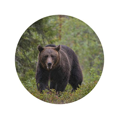 Round Brown Bear Walking In Forest The Office Blanket Soft and Cozy Blankets & Throws Circle Velvet Blanket Throws and Blankets for Sofa for Home Bed Couch Travel(47in/60in)