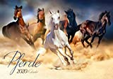 Pferde 2020