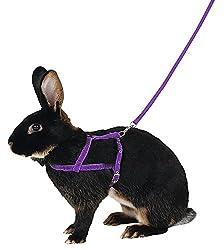 rabbit harness collar and lead