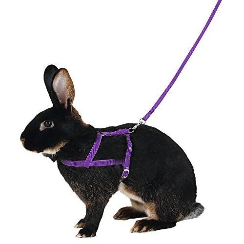 Kerbl - Imbracatura per spalle agilità con guinzaglio, misura media, 2 m