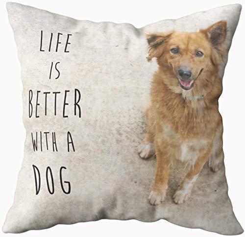 Divertida funda de almohada, lindo perro marrón con mejor quotLife is dogquot 40.6 x 40.6 cm, fundas de almohada para sofá o sofá