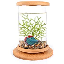 LLDKA Desktop Aquarium, Family ecological Aquarium for 360 degree display, clear and transparent mini Delicate Landscaping