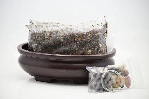 BooTool(TM) Bonsai Potting Kit, 6.25' Bonsai Pot Included