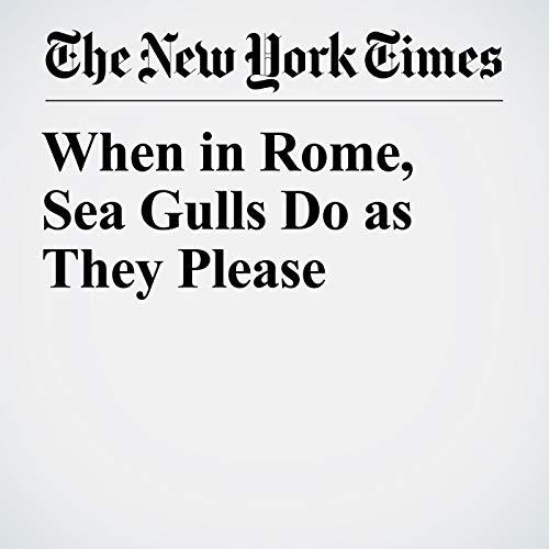 When in Rome, Sea Gulls Do as They Please copertina