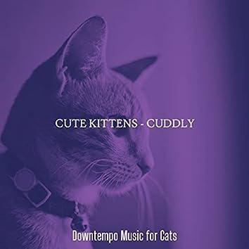 Cute Kittens - Cuddly