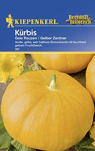 Kürbissamen - Kürbis Gelber Zentner von Kiepenkerl