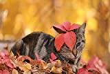 Diamond Painting Cat In Autumn Leaves Arts Craft For Home Wall Decor 40X50Cm Round