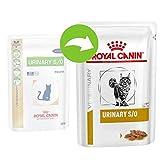 ROYAL CANIN Urinary S/O Chick Comida para Gatos - 4800 gr