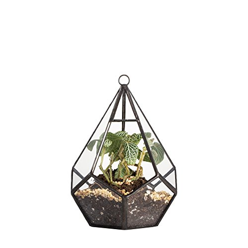 5.3 inches Hanging Glass Terrarium Modern Artistic Wall Tears Shape Diamond Geometric Polyhedron Air Plant Holder Desk Planter DIY Centerpiece Vase Succulent Flower Pot (Plants not Included)